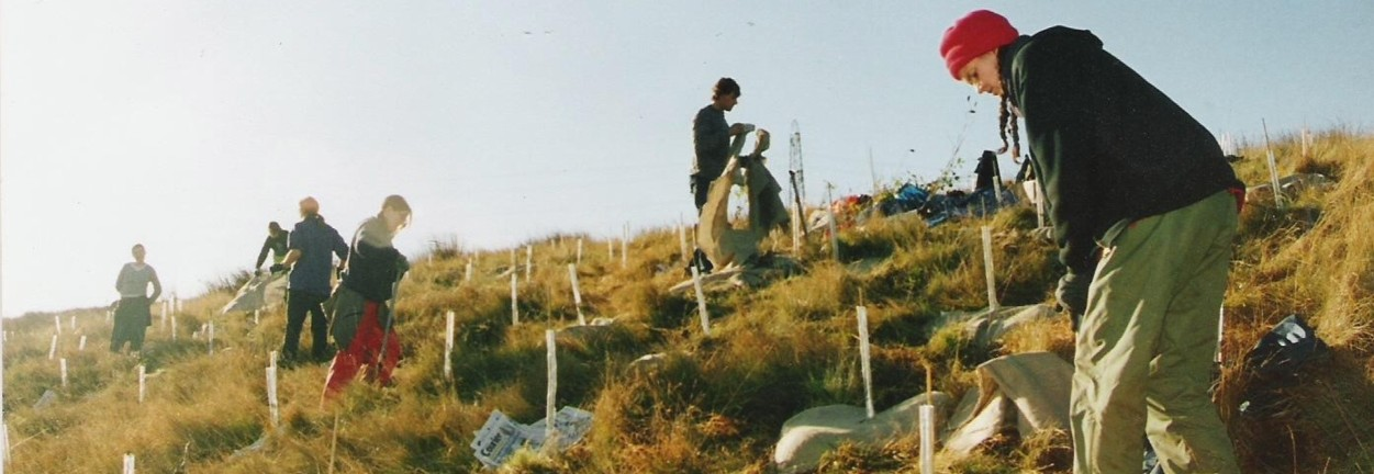 Photo of planting