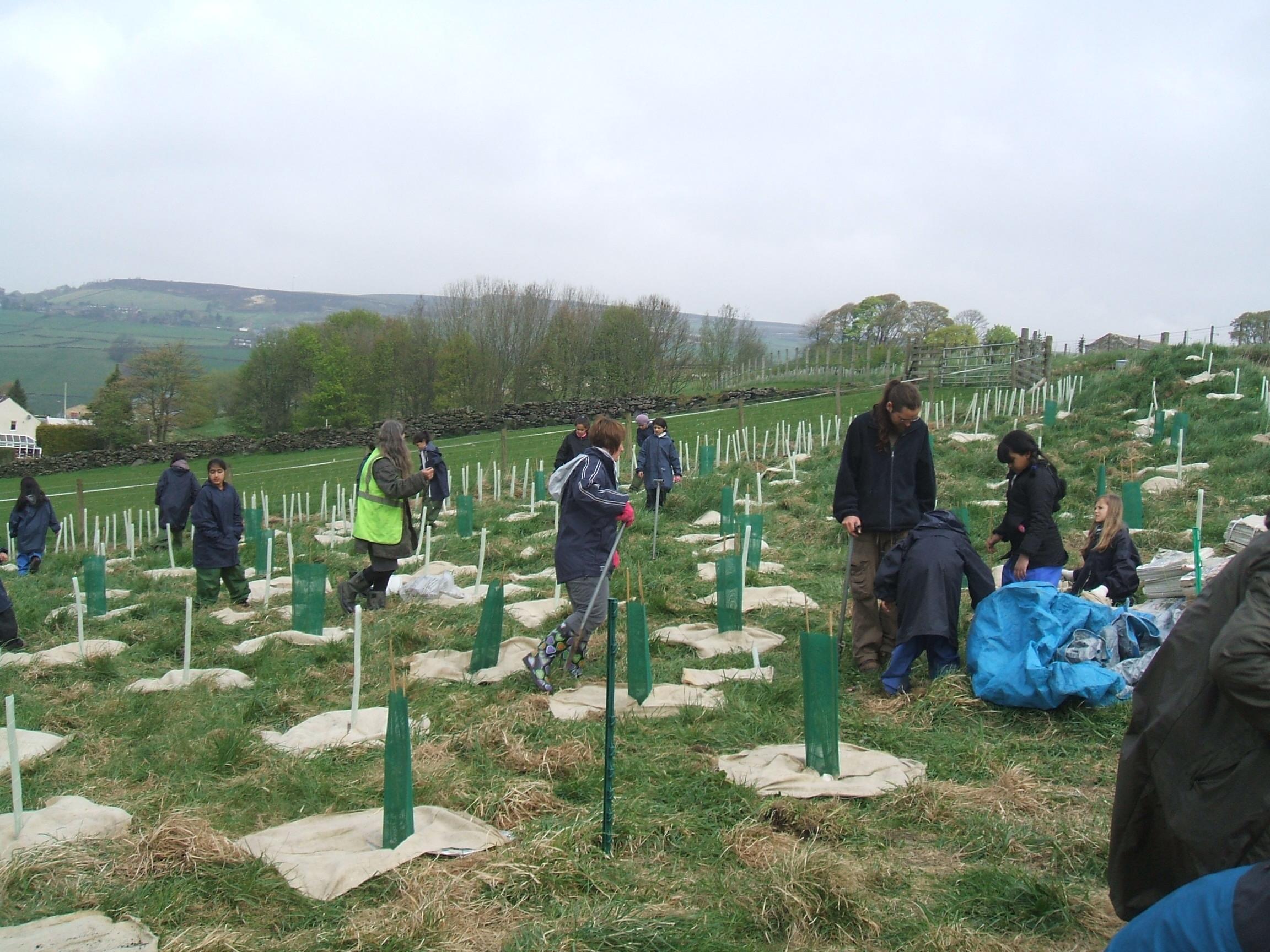 Planting trees at Great Burlees Farm